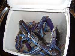 Blue manna crabs