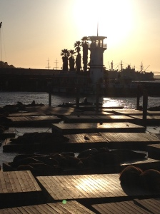 Sun set over sea lions